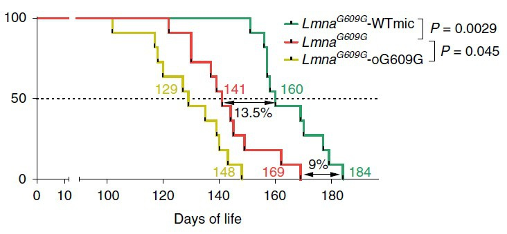 Innovation: Transplantation of fecal microbiota prolongs the life of prematurely aging mice